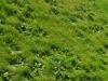 Sprøjtning af græs